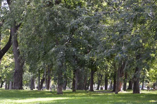 DSC_0656-Parc-Lafontaine-r